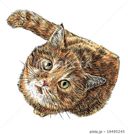 Little cat 19495245