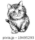 19495293
