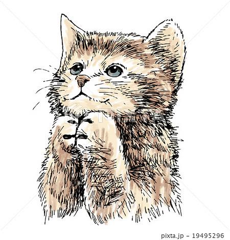 lovely kitten hand drawn vector 19495296