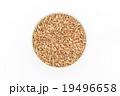 ウィートベリー: Wheat Berry 19496658