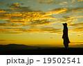 風景 女性 山頂の写真 19502541