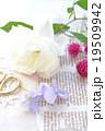 薔薇とビオラ 19509942