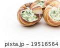調理前のエスカルゴ: Uncooked escargot 19516564