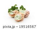 調理前のエスカルゴ: Uncooked escargot 19516567