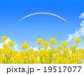 菜の花畑 19517077