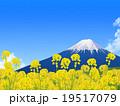 菜の花畑と富士 19517079