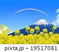菜の花畑と富士 19517081