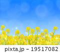 菜の花畑 19517082
