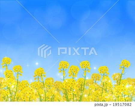 菜の花畑のイラスト素材 19517082 Pixta