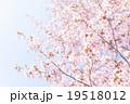 桜(空バック) 19518012
