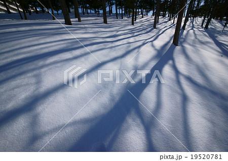 真冬の仙台泉パークタウン雪景色「新雪に映る街路樹の影絵」冬景色19520781