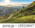 【静岡県】天空の茶畑 19524647
