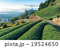 【静岡県】天空の茶畑 19524650