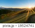 【静岡県】天空の茶畑 19524741