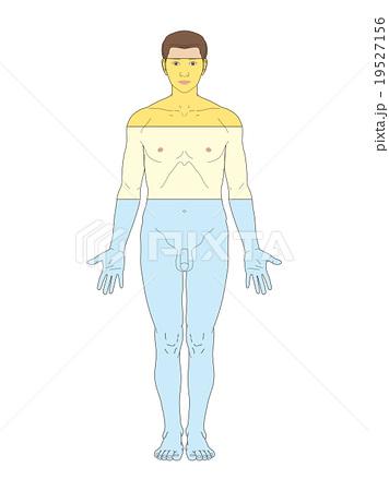 ヒトの構成物質と割合(男)のイ...