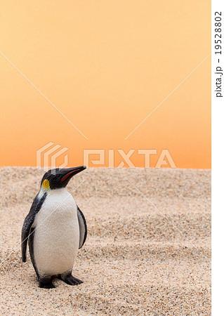 砂漠のペンギン: Penguin in desert 19528802