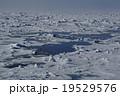 北極海の風景 19529576