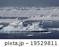 北極海 氷山 海氷の写真 19529811
