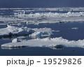 北極海の風景 19529826