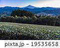 【静岡県】早朝・富士山と茶畑 19535658