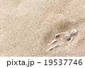 砂漠に埋もれた白骨死体: Skeleton burried in the desert 19537746