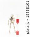 短い寿命にうろたえるガイコツ:Skeleton on the verge of death 19538101