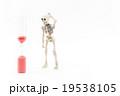 短命に困惑するガイコツ:Skeleton on the verge of death 19538105