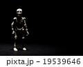 闇の中のガイコツ:Skeleton in the dark 19539646