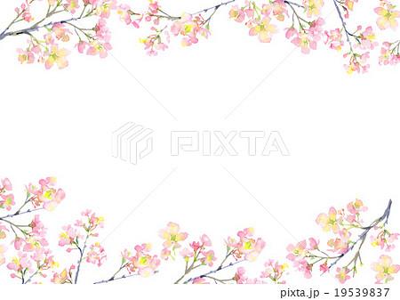 桜 イラスト 背景  19539837