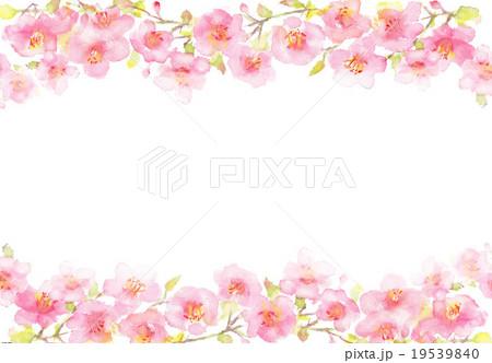 桜 イラスト 背景  19539840