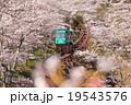 桜 電車 船岡城址公園の写真 19543576
