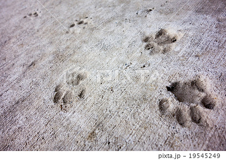猫の楽園「田代島」コンクリートにネコの足跡可愛い肉球19545249