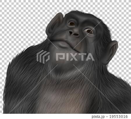 現實的黑猩猩插圖(杜亞臉) 19553016