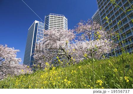 春の二子玉川 19556737