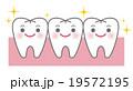 歯 キャラクター ベクターのイラスト 19572195