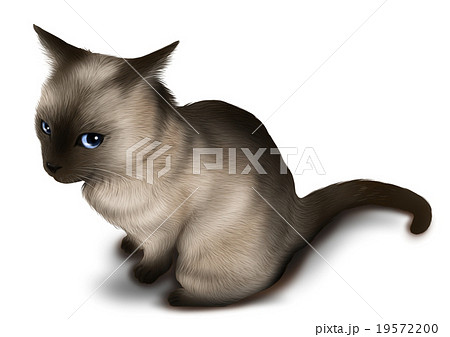 リアルなシャム猫イラストのイラスト素材 19572200 Pixta
