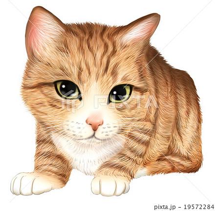 トラ猫の子猫のイラストのイラスト素材 19572284 Pixta