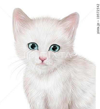 リアルな白猫子猫のイラストのイラスト素材 19572542 Pixta