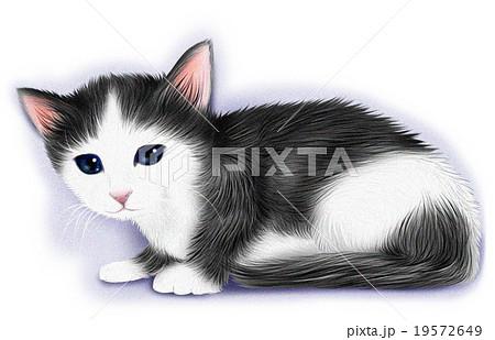 リアルなハチワレ猫・白黒猫(子猫)のイラスト