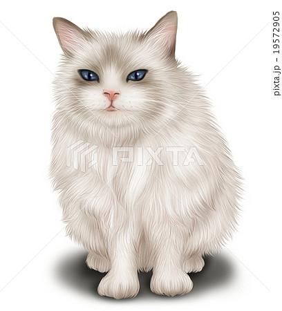 リアルな猫(ヒマラヤン)のイラスト 19572905