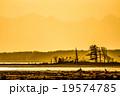 別海町野付半島  トドワラ 19574785