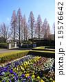 12月紅葉 メタセコイア・スギ科362山手イタリア山庭園 19576642