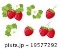 苺 セット 果実のイラスト 19577292