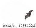 おもちゃのコウモリ: Toy Bat 19581228