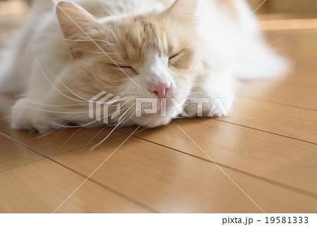 マタタビに酔う猫の顔 19581333