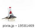 クジラナイト:Knight riding Whale 19581469