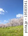 桜 花 草原の写真 19583541