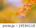 優しい秋の彩り 19594116