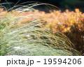 紅葉と秋草 19594206
