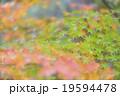 うねる彩り 19594478